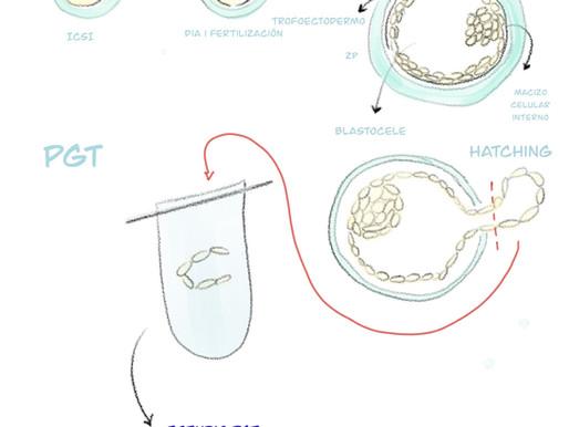 Qué es el estudio genético de embriones? Para qué sirve?