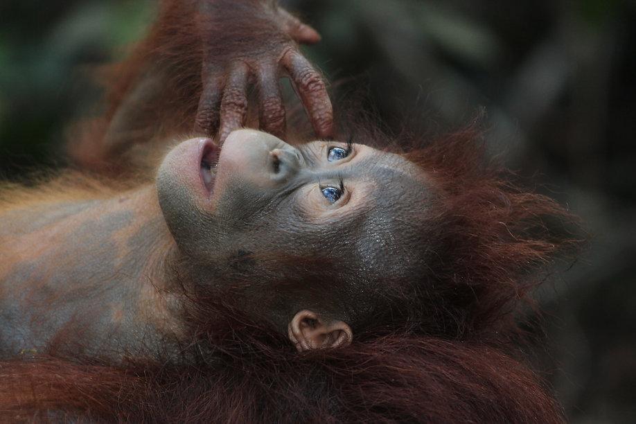 wildlife-3085394.jpg