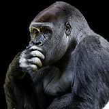 animal-world-4328243_640.jpg