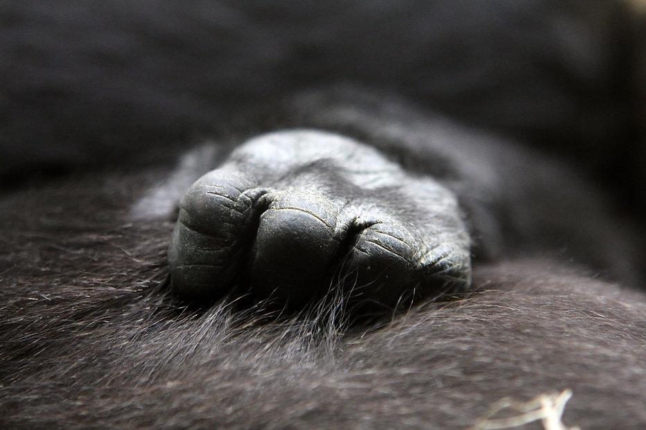 gorilla-622056.jpg