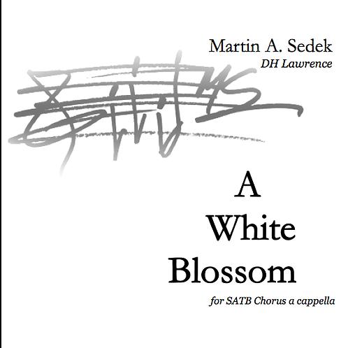 A White Blossom