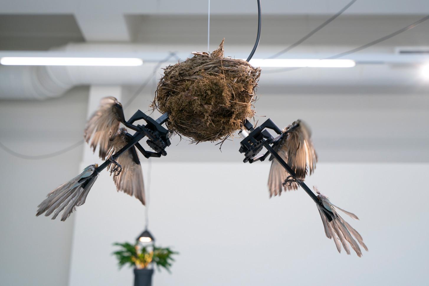 Family Nest