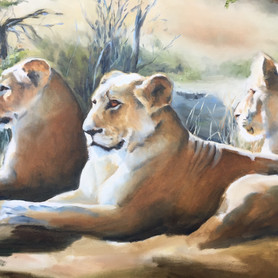 The Lionesses