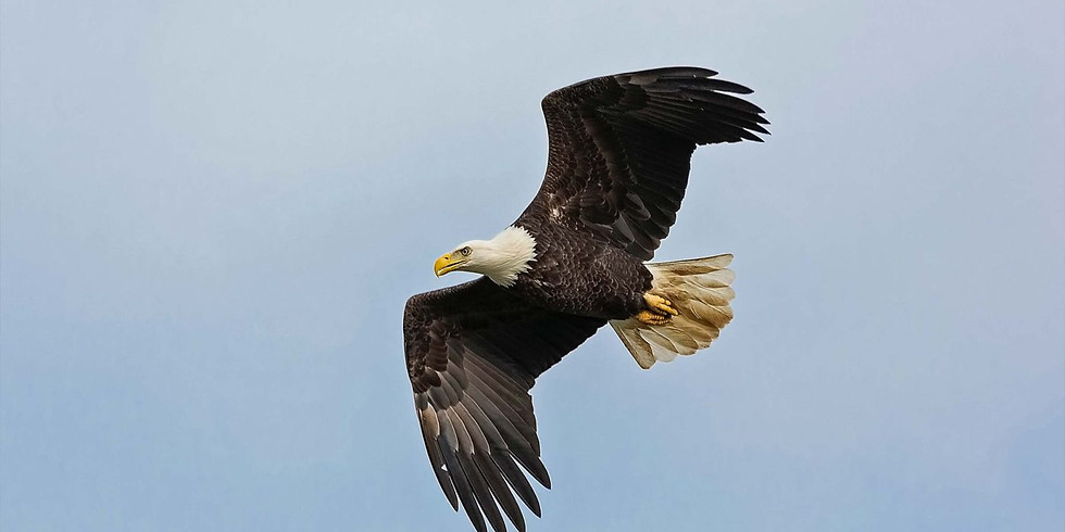 DAY TRIP: Eagle Watch @ Starved Rock