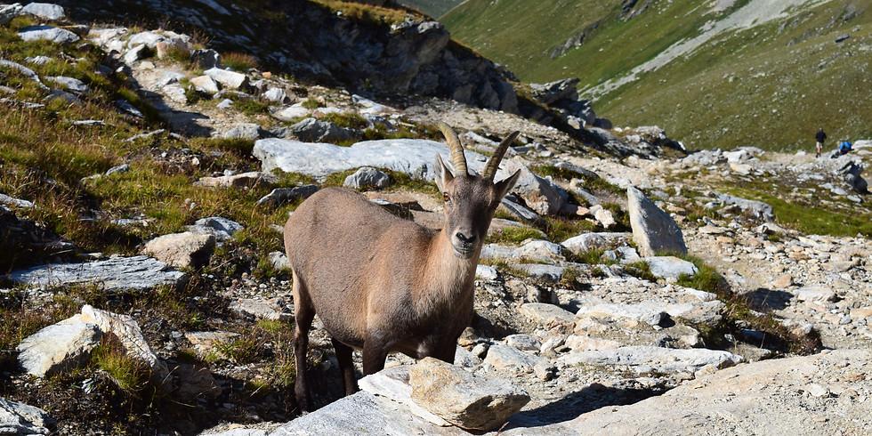 Rando observation de la faune de montagne