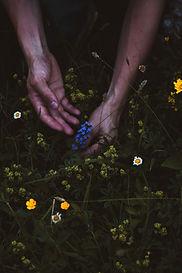 Déjà initié aux plantes sauvages ? Vous avez quelques connaissances en botanique ? Approfondissez vos connaisances en plantes sauvages comestibles, ou sur des thématiques ciblées comme les thés et infusions, plantes aromatiques, plantes toxiques.