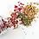 Thumbnail: Herbal Blend
