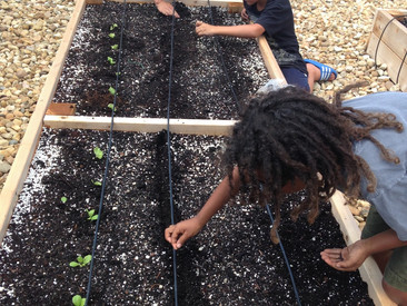 Starting over: Life Lessons in Gardening.