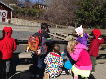 Week 21: Animal Digestion, Presentations, Introduction to Antarctica, and KID Museum!
