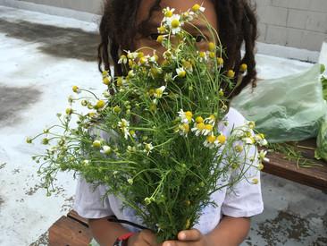 End of Spring Gardening!