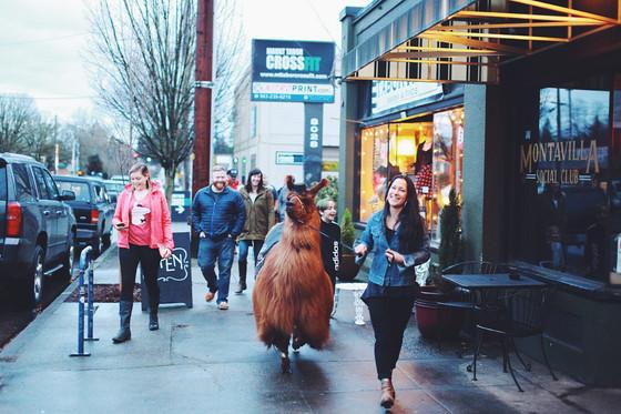 And sometimes, we photograph llamas...