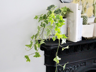 Healthy Home Edit: Plant Therapy