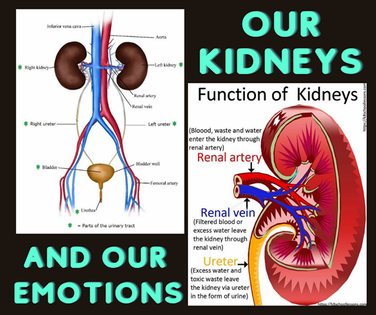 Our Kidneys