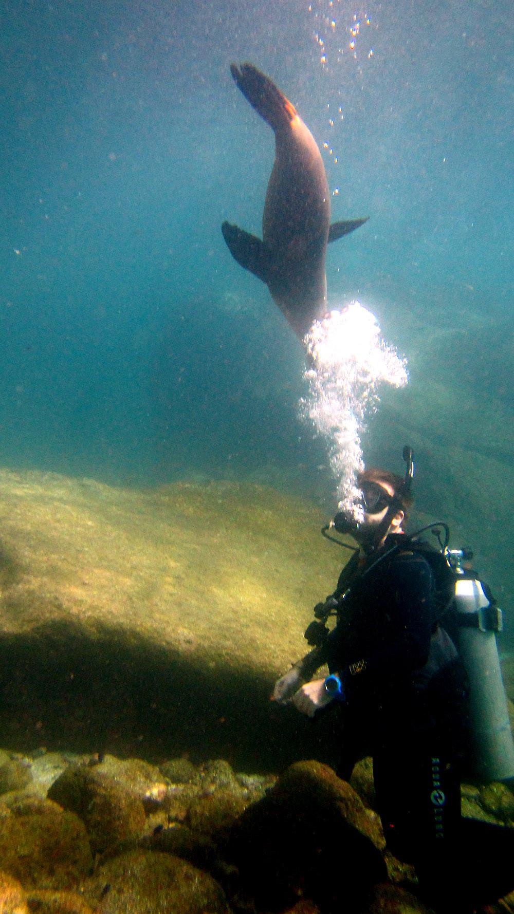 diver with sea lion in la paz