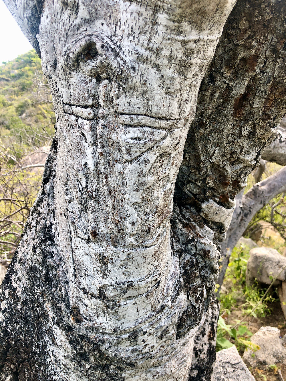 Miners mark tree carving