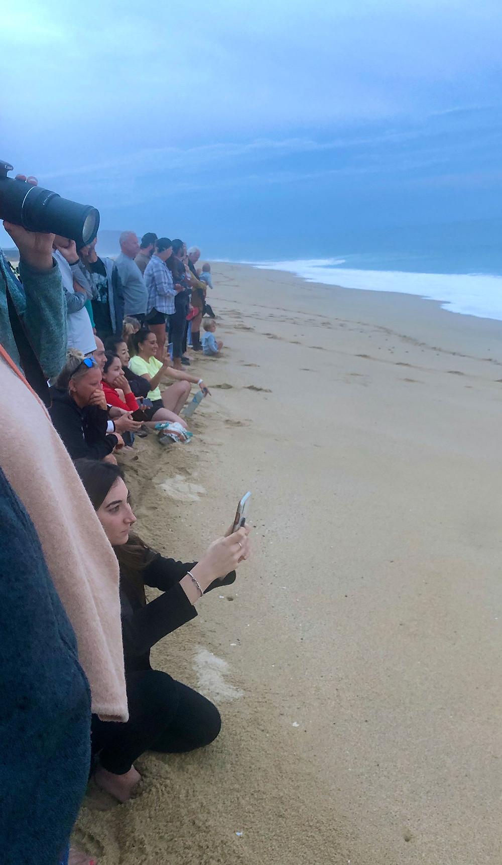 Las Playitas beach turtle release todos santos