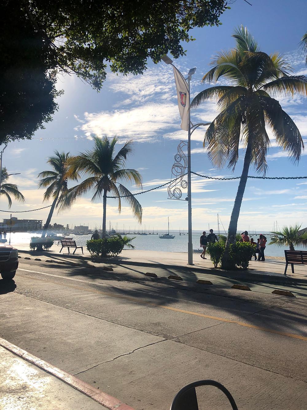 la paz malecon with palm trees