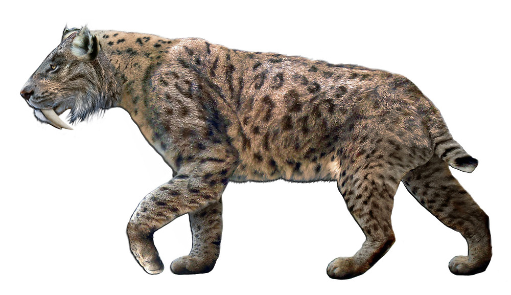 museum of paleontology guadalajara sabertooth tiger smilodon fatalis