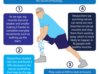 Future of Aging: Muscle Loss in Old Age Linked to Fewer Nerve Signals