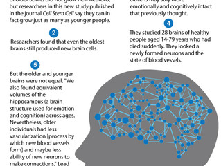 Future of Aging: Older Adults Grow Just As Many New Brain Cells As Young People