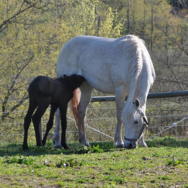 Wildwych Belladonna and her lovely colt