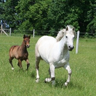 Pearl with purebred filly Blue Rock Nuala