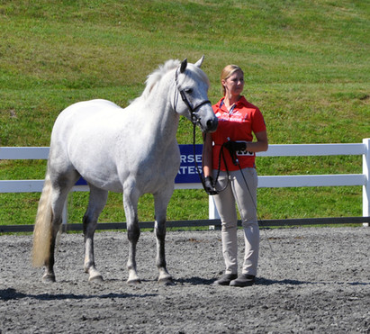 Bella at the 50th Anniversary Region I Show, 2nd place purebred mares 4-8 years