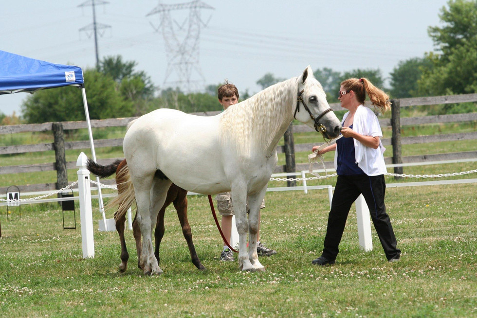 Pearl at the Midwest Breeders Show