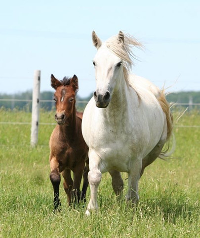 Pearl woth purebred filly Blue Rock Nuala