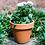 Thumbnail: Custom Painted Pot