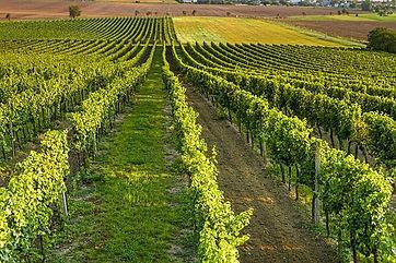 wine-4565912__340.jpg