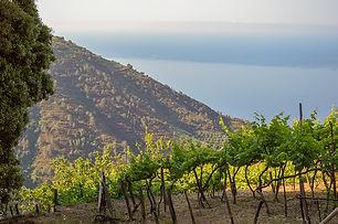 vineyard-5048384_960_720.jpg