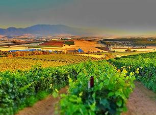 vineyard-3700026_960_720.jpg