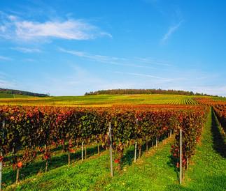 Région de l'Alentejo Domaine agricole de 74 ha,  Vignes & oliviers 1 800 000 €