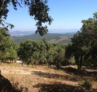 Région de l'Alentejo Domaine de 272 ha Production liège & élevage caprin 1 496 000 €
