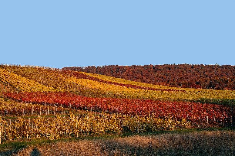 autumn-1794054_960_720.jpg