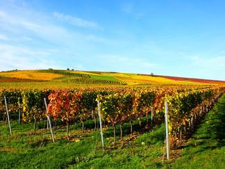 VIGNOBLES White Bird Invest est spécialisé dans la transmission de vignobles dans les régions de l'Alentéjo, du Douro et de Lisbonne.