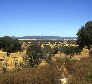 Domaine de chasse 530 ha Alentejo 3 500 000 €