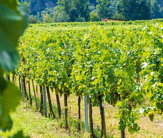 Région de l'Alentejo Propriété viticole de 70 ha Demeure typique, vignes,  3 750 000 €