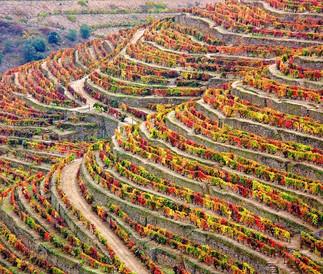 Région du Douro Domaine de 60 hectares dans le district de Viseu 3 500 000 €