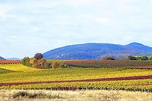 vineyards-3815587__340.webp