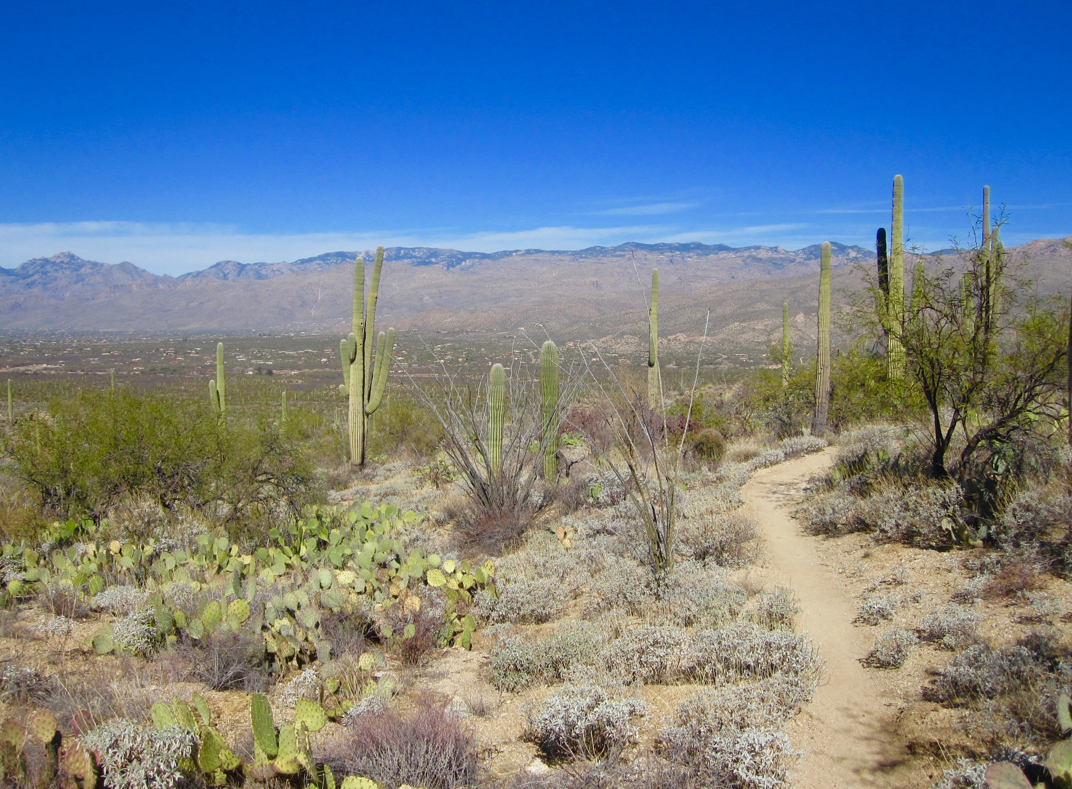 #40 Saguaro National Park