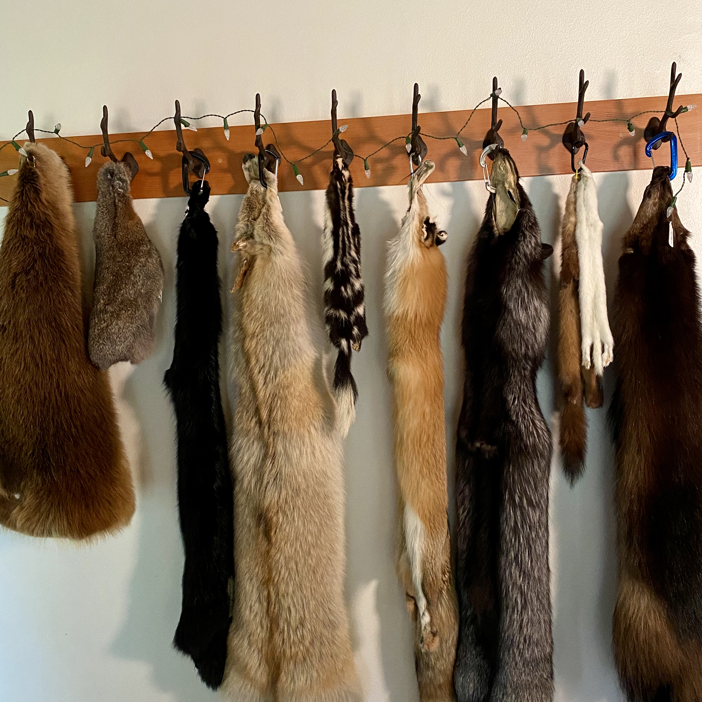 Pelt collection