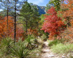 #30 Guadalupe Mountains N.P.