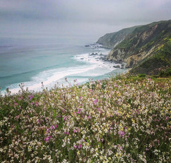View from Tomales Pt Trail