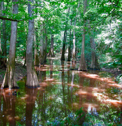 #47 Congaree National Park