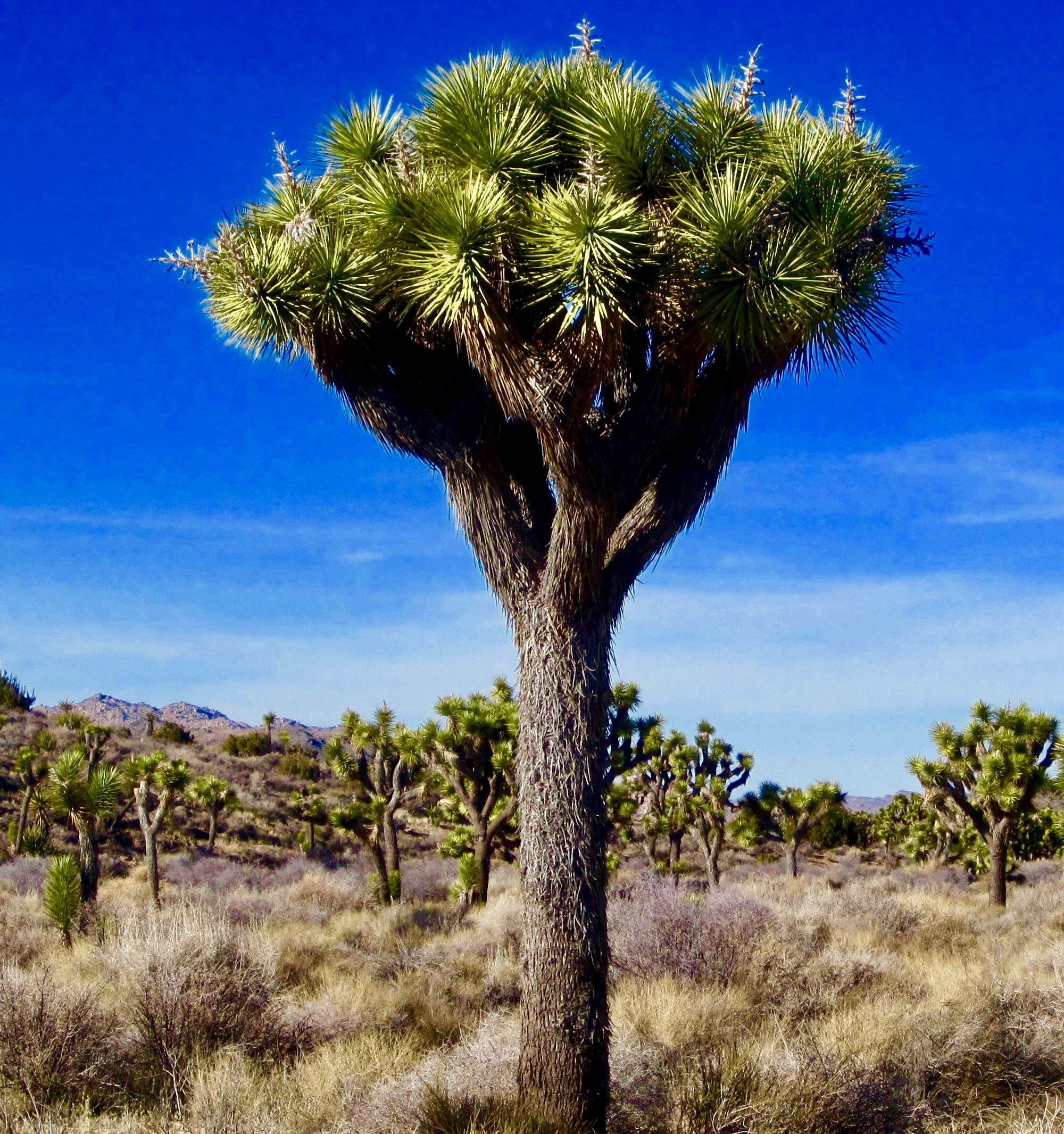 #41 Joshua Tree National Park