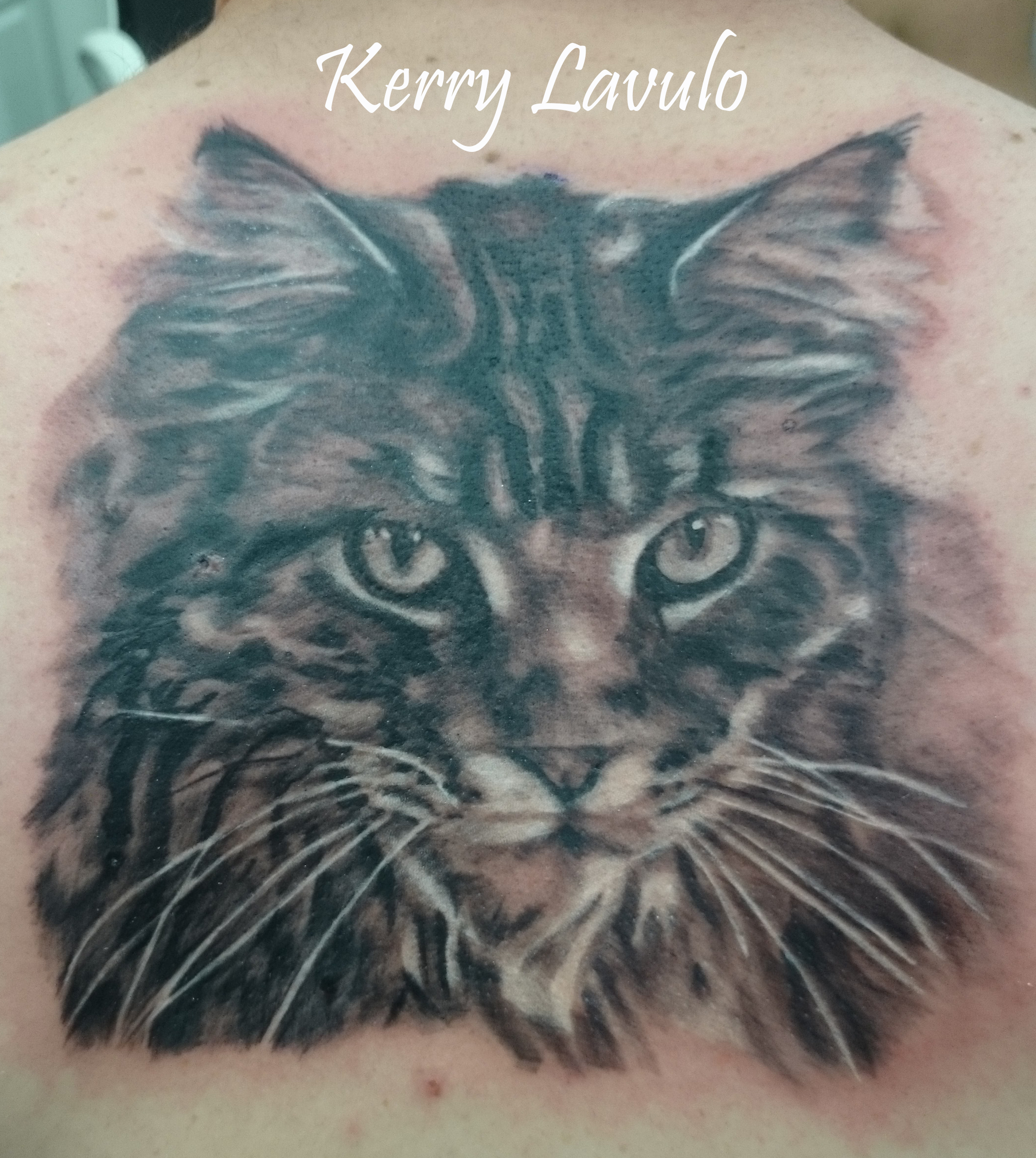 tattoo-cat-maine-coon-kerry-lavulo