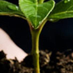 Characteristics of Effective Church Planters