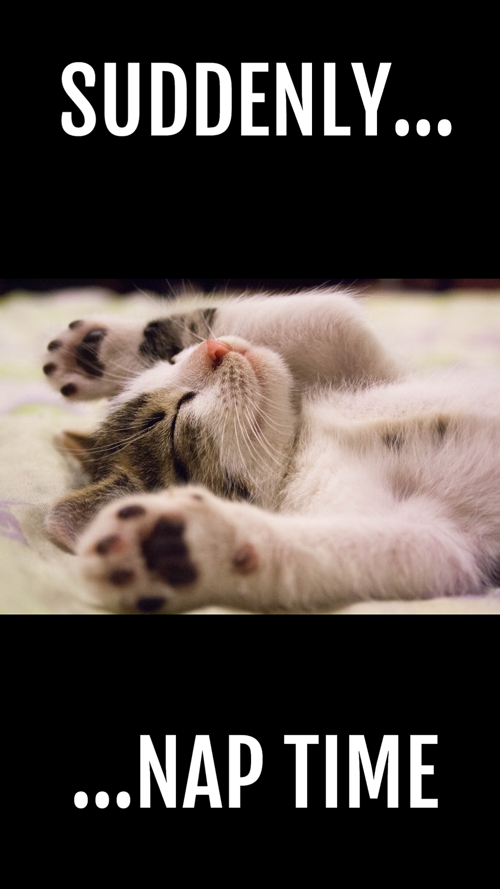 Napping social media story template with cute kitten taking a nap